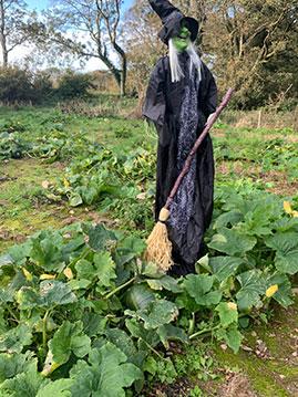 Witch Gardener!